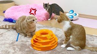 みんなでご飯を食べた後に険悪なムードになる短足猫と新入り猫