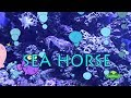 Kids Learn Animals Video Flashcards: Ocean Animals