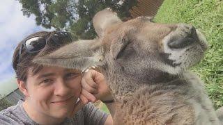 Kangaroo Selfie! Rooster Teeths Aussie Tour.