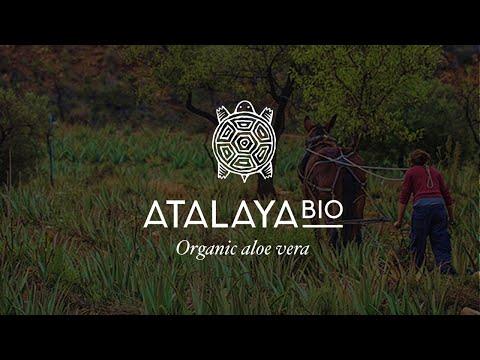 HIGH QUALITY ORGANIC ALOE VERA EL TALAYON SPAIN