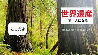 ▶︎世界遺産▶︎小人になれる場所『レッドウッド国立公園』