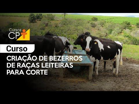 Clique e veja o vídeo Curso Criação de Bezerros de Raças Leiteiras para Corte