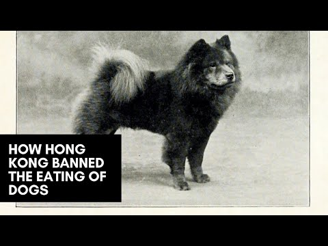How Colonial Hong Kong Banned the Eating of Dogs