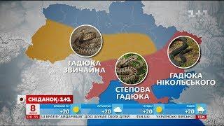 Які види змій найчастіше трапляються в Україні