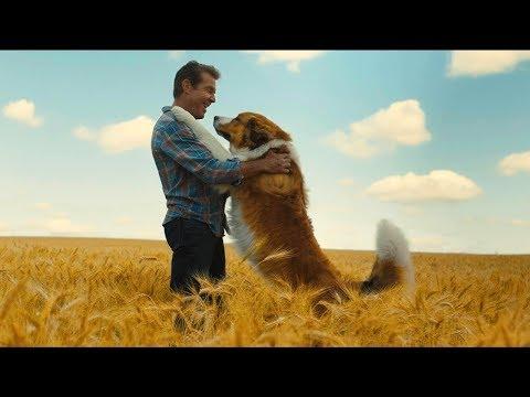 Egy kutya négy útja - magyar szinkronos előzetes #1 / Családi letöltés
