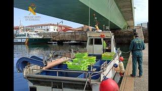 Guardia Civil entrega pescado intervenido al banco de alimentos de Cantabria
