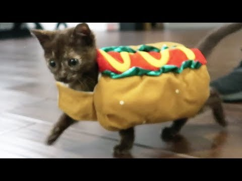 KITTENS FIRST HALLOWEEN COSTUME
