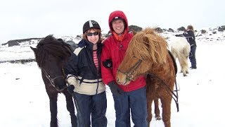 iceland viking horse riding and blue lagoon tour