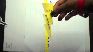 DNA Replication, Transcription, & Translation! (In Plain English style)