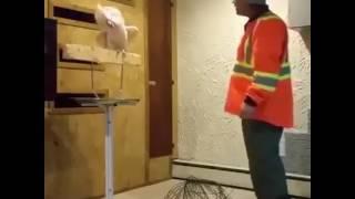 Evi yıkılan Papağan 39 ın inanılmaz tepkisi