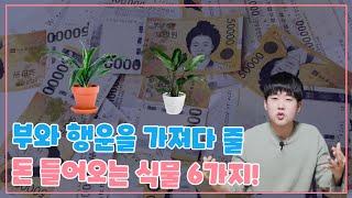 부자가 될 수 있는 돈 들어오는 식물 6가지! [개업화…