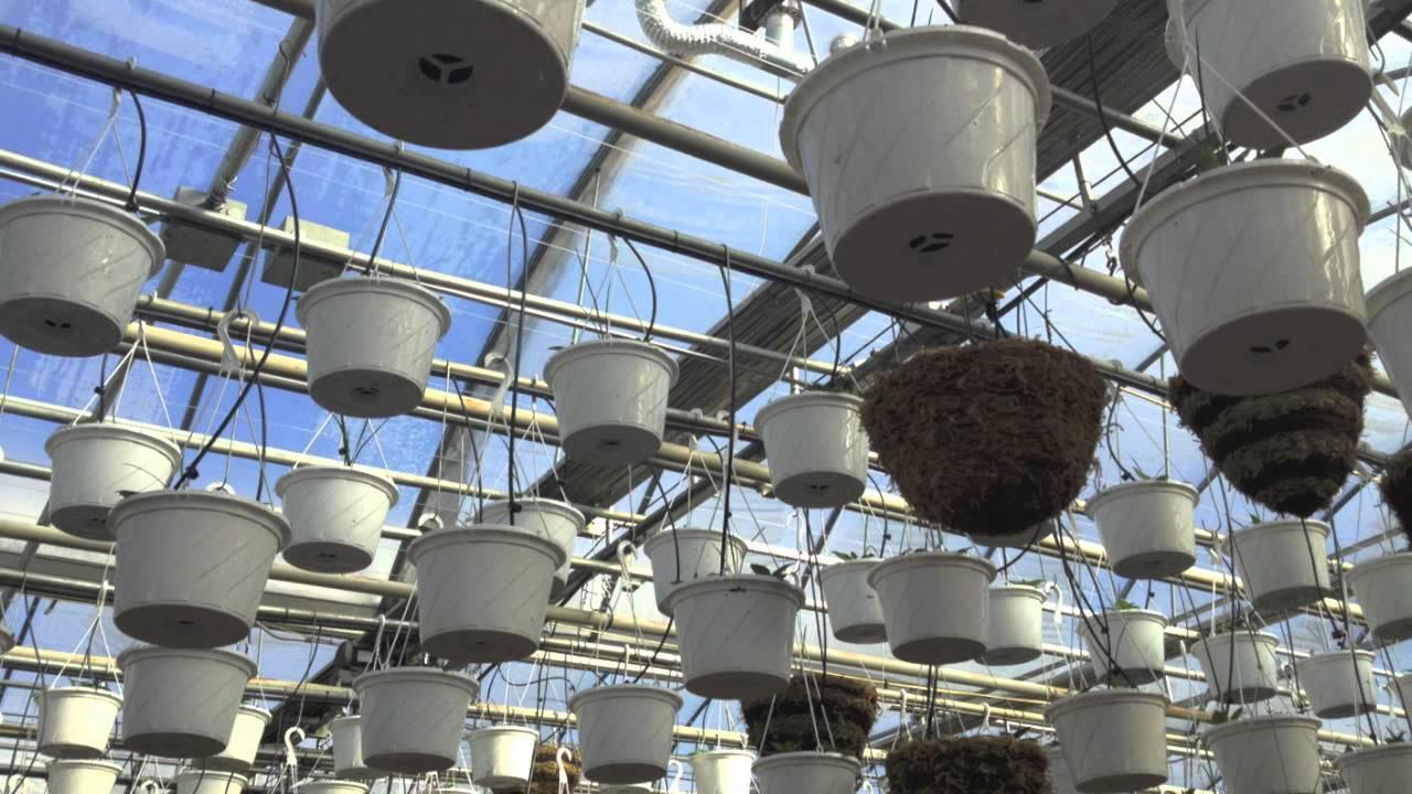 gavishusa greenhouse environmental computer control - YouTube