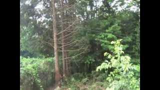 Repeat youtube video チェーンソーとひっぱりだこによるヒノキの伐採【伊勢原森林里山研究会】