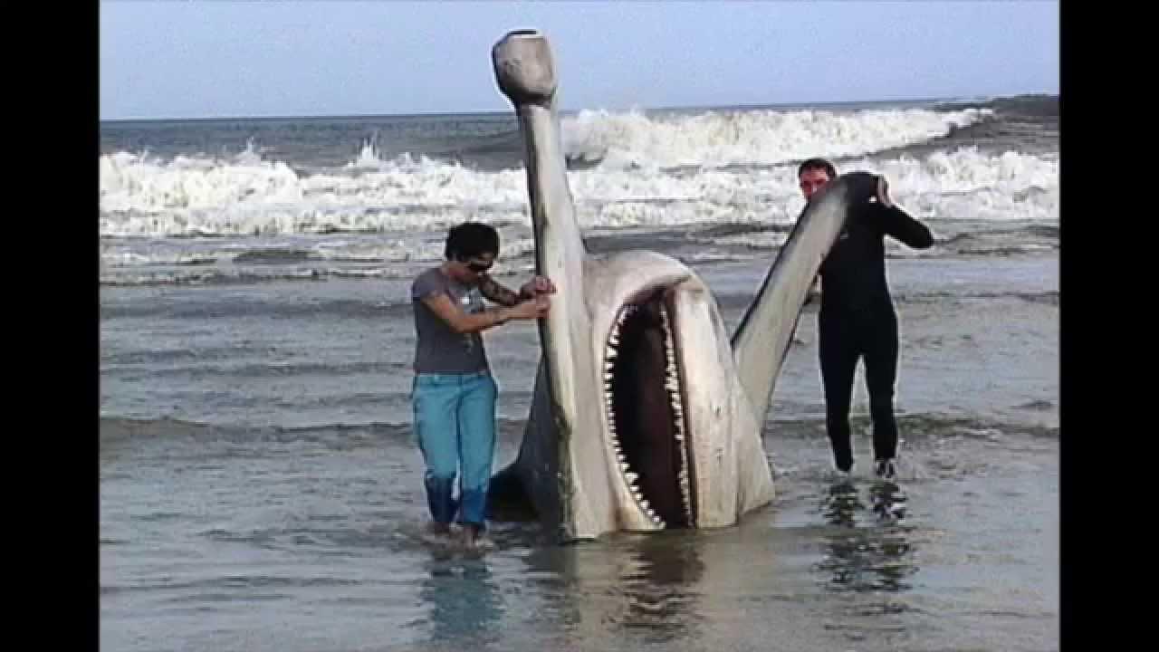 largest hammerhead shark - photo #4