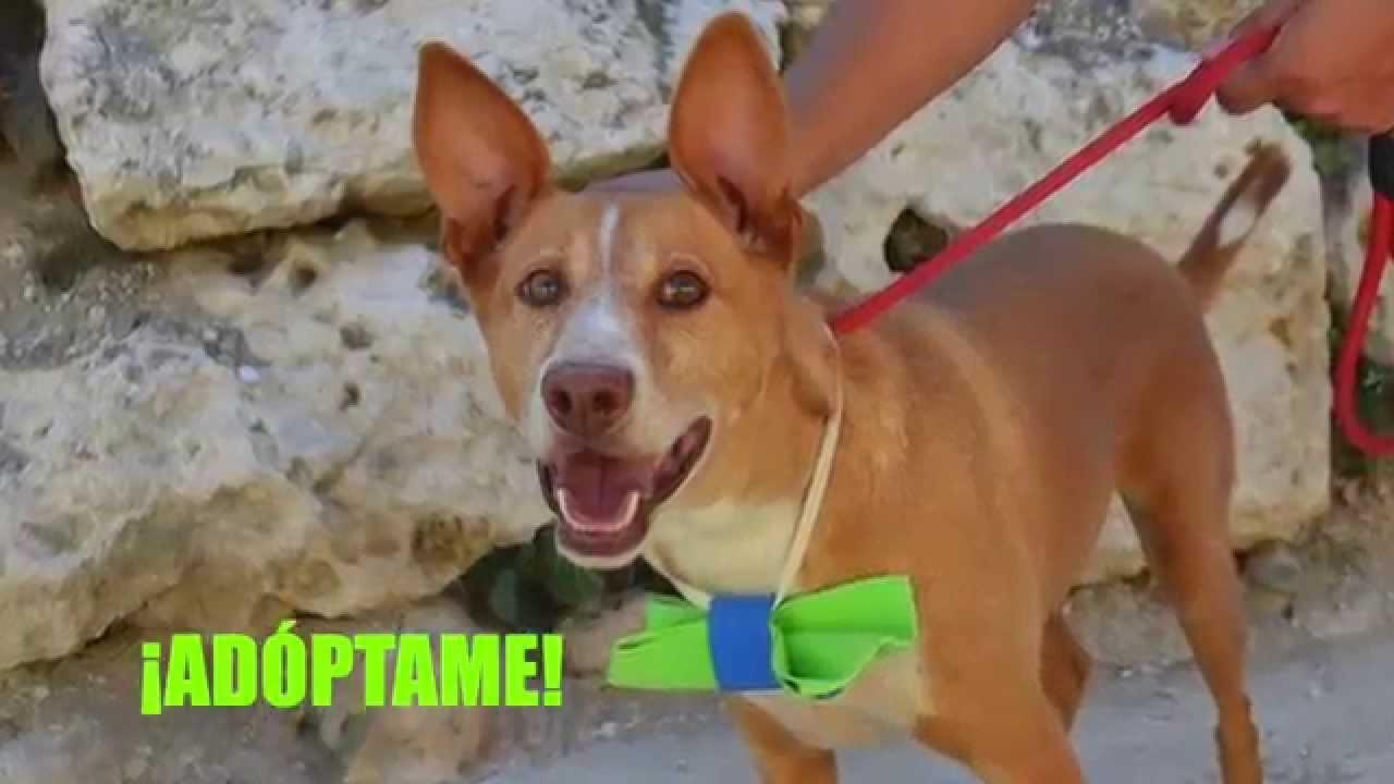 Pocholo protectora de animales y plantas de m laga youtube for Protectora de animales malaga ciudad jardin