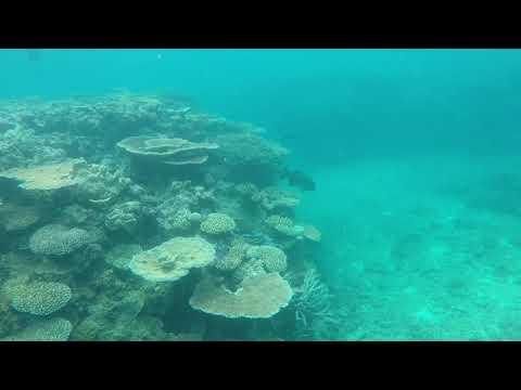 Reg Ward Reef - Great Barrier Reef