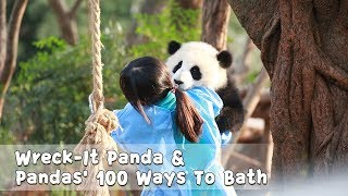 【Panda Countdown】Wreck-It Panda | Baby Panda Handstand | Pandas' 100 Ways To Bath | iPanda