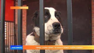 Герда снова дома. 10-й канал помог найти собаку.