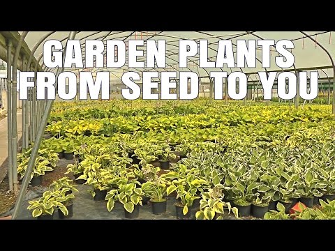 Schram Plants Wholesale Plant Nursery Co. Kildare Ireland - Suppling Garden Plants in Ireland
