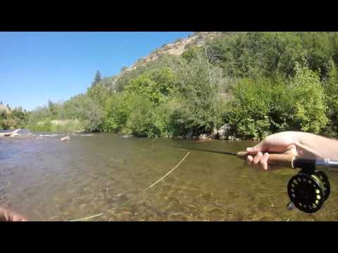 Fly Fishing the South Fork Ogden River Utah - Quick Trip!