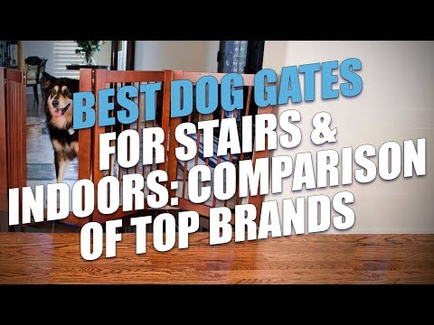 Best Dog Gates for Stairs & Indoors: Comparison of Top Brands