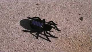 Solar Powered Toy Spider Review