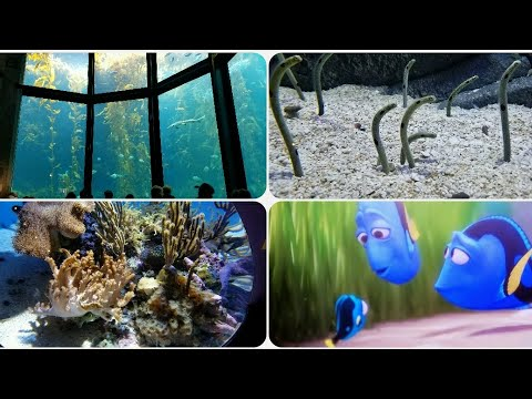 Monterey Bay Aquarium - the place that inspired Finding Dory