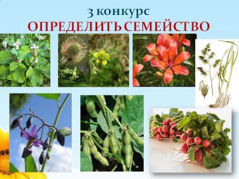 Презентация Урок   игра по биологии Царства Растения