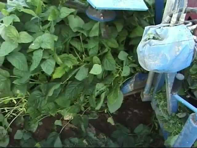 ASA-LIFT GB-100 Green bean harvester