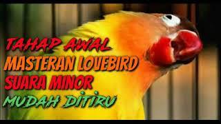 Download lagu MASTERAN LOVEBIRD KONSLET MINOR PALING DICARI DAN MUDAH DITIRU