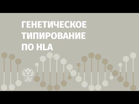 Ольга Барыгина про генетическое типирование по HLA