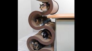 Домашние животные и мебель для них