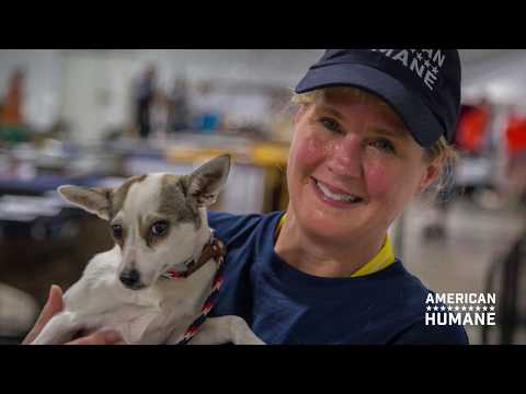 American Humane - Year In Review (2017)