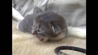 Первый раз в жизни котенок открыл глаза