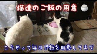【現状はこんな感じ】朝晩の食事の用意風景と猫達 thumbnail