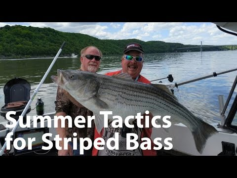 Webinar: Summer Tactics for Striped Bass