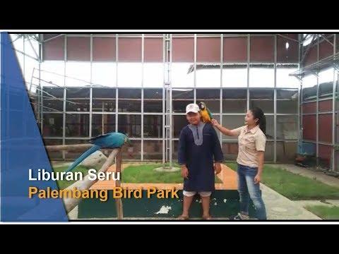 Ramai Pengunjung Hingga Wahana Terbaru di Palembang Bird Park