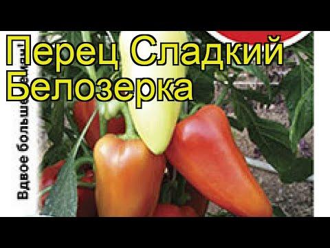 Перец сладкий Белозёрка. Краткий обзор, описание характеристик, где купить семена cápsicum ánnuum | белозёрка | описание | сладкий | краткий | перец | обзор | psicum | nnuum | п | c