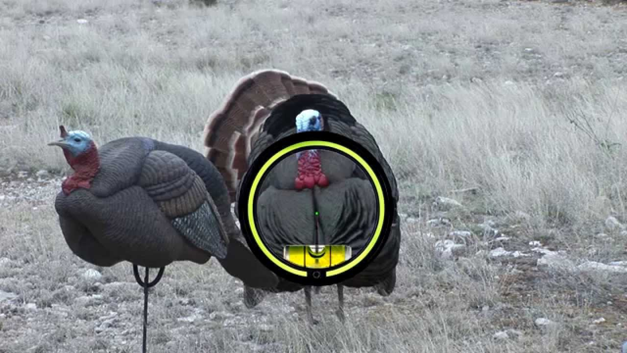 Anatomy of turkey