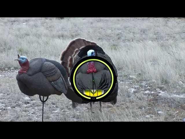Turkey Anatomy Lesson to Ensure Clean Bow Kills