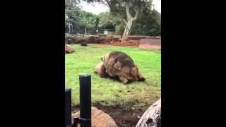 Honolulu zoo turtle porn