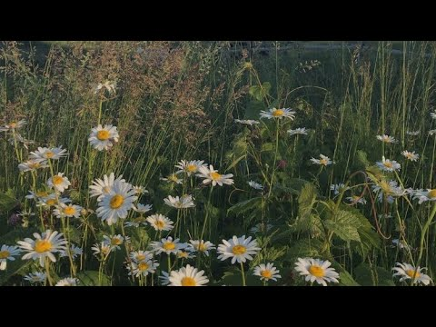 Kung Pwede Lang by Eurika [Official Music Video]