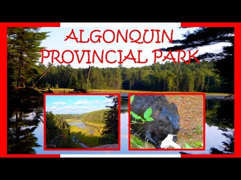 Canada Trip part 2 – Algonquin Provincial Park, Ontario | Inspired by travel