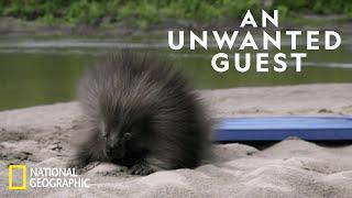 Porcupine Proofing a Cabin | Life Below Zero