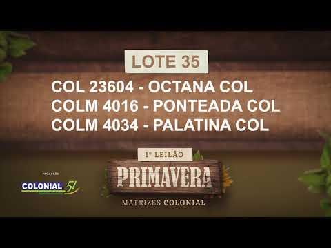LOTE 35   COL 23604,COLM 4016,4034