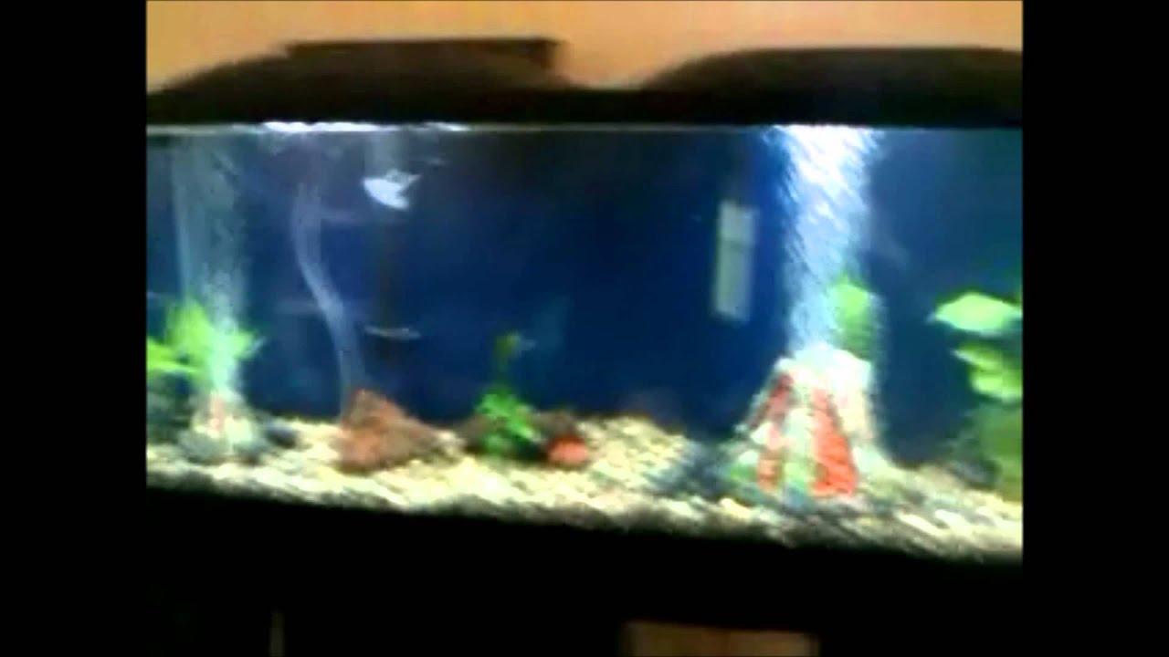 55 gallon marineland led fish tank youtube for 55 gallon fish tank petsmart