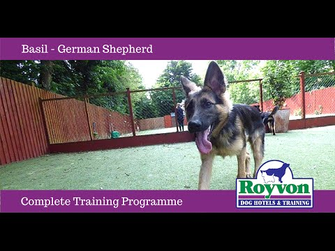 How to stop your German Shepherd Dog Jumping up and Mouthing
