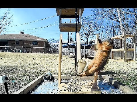 GOLDEN FOOT   vs   SQUIRREL  Kicking Machine is no match!