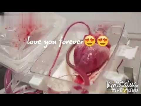 Edho Roju Nuvu Vasthavanna Iashe Love Feel Song