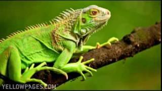 Royal Oak Veterinary Woodside Animal & Bird Clinic